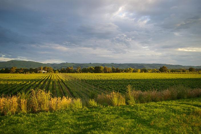 Lynfer Estate Vineyard